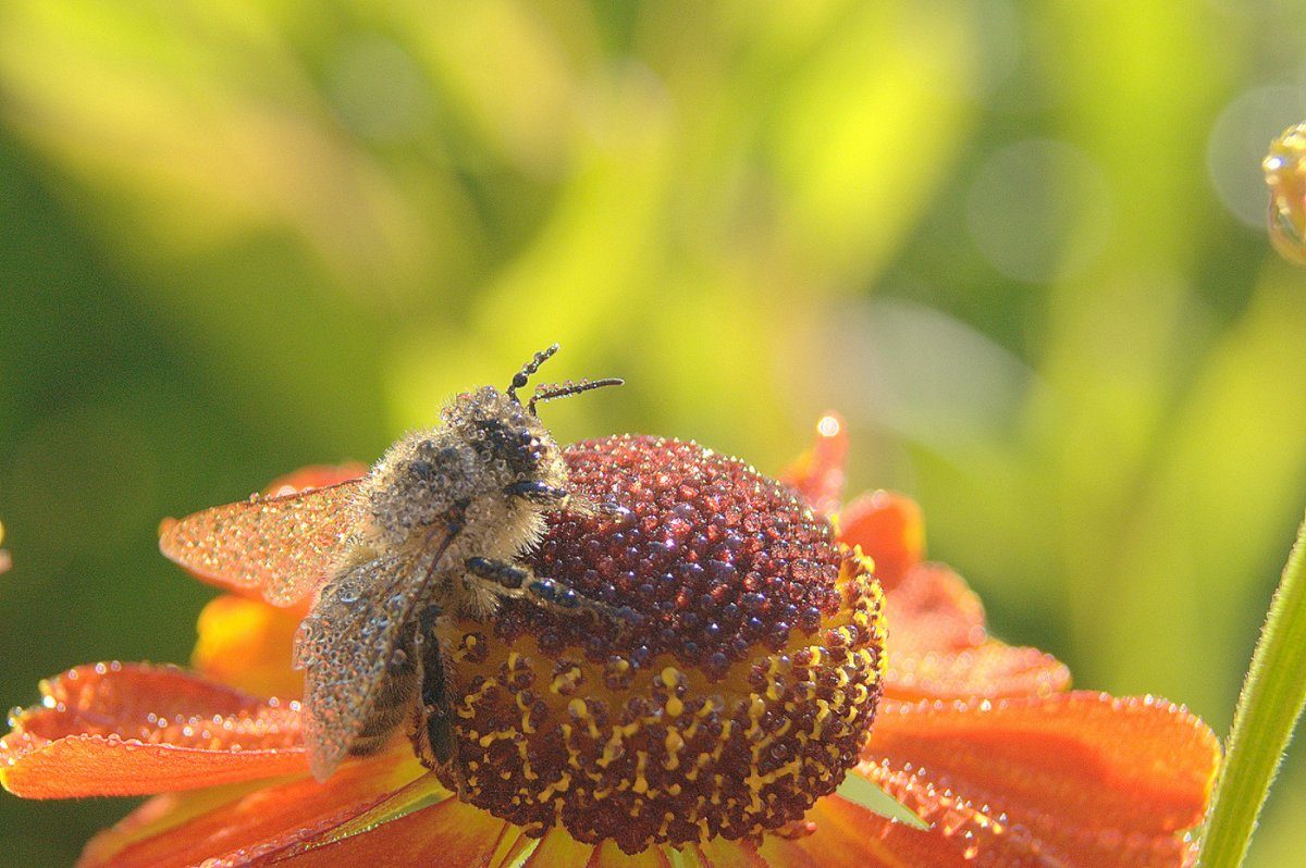 Красивые фотографии цветов и насекомых