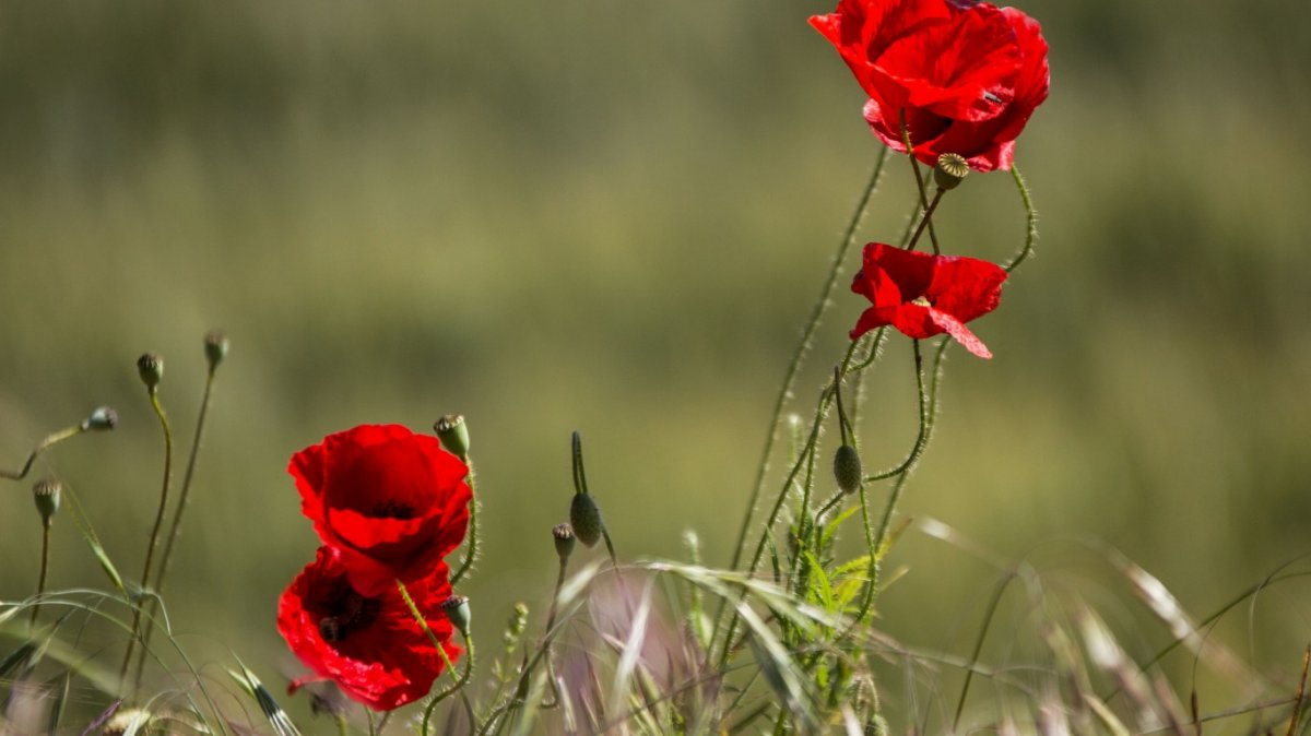 Beautiful pictures of flowers and insects 11
