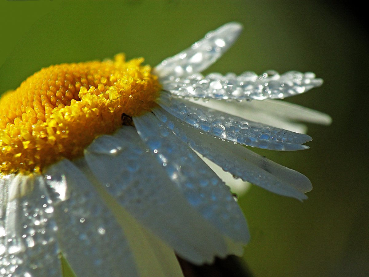 Beautiful pictures of flowers and insects 12