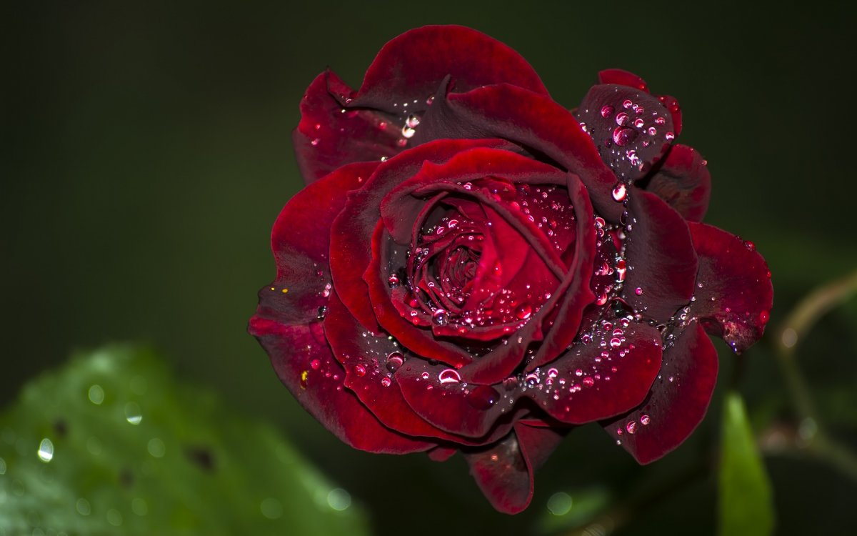 Beautiful pictures of flowers and insects 14