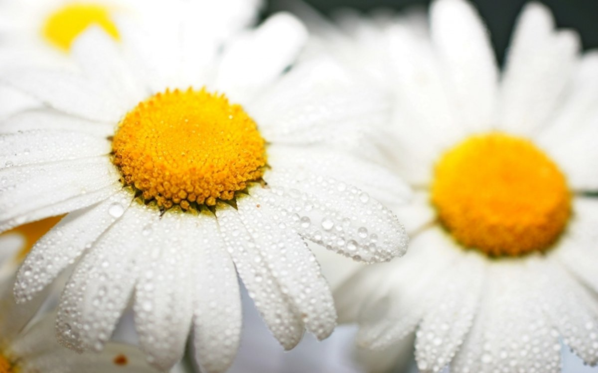 Beautiful pictures of flowers and insects 15
