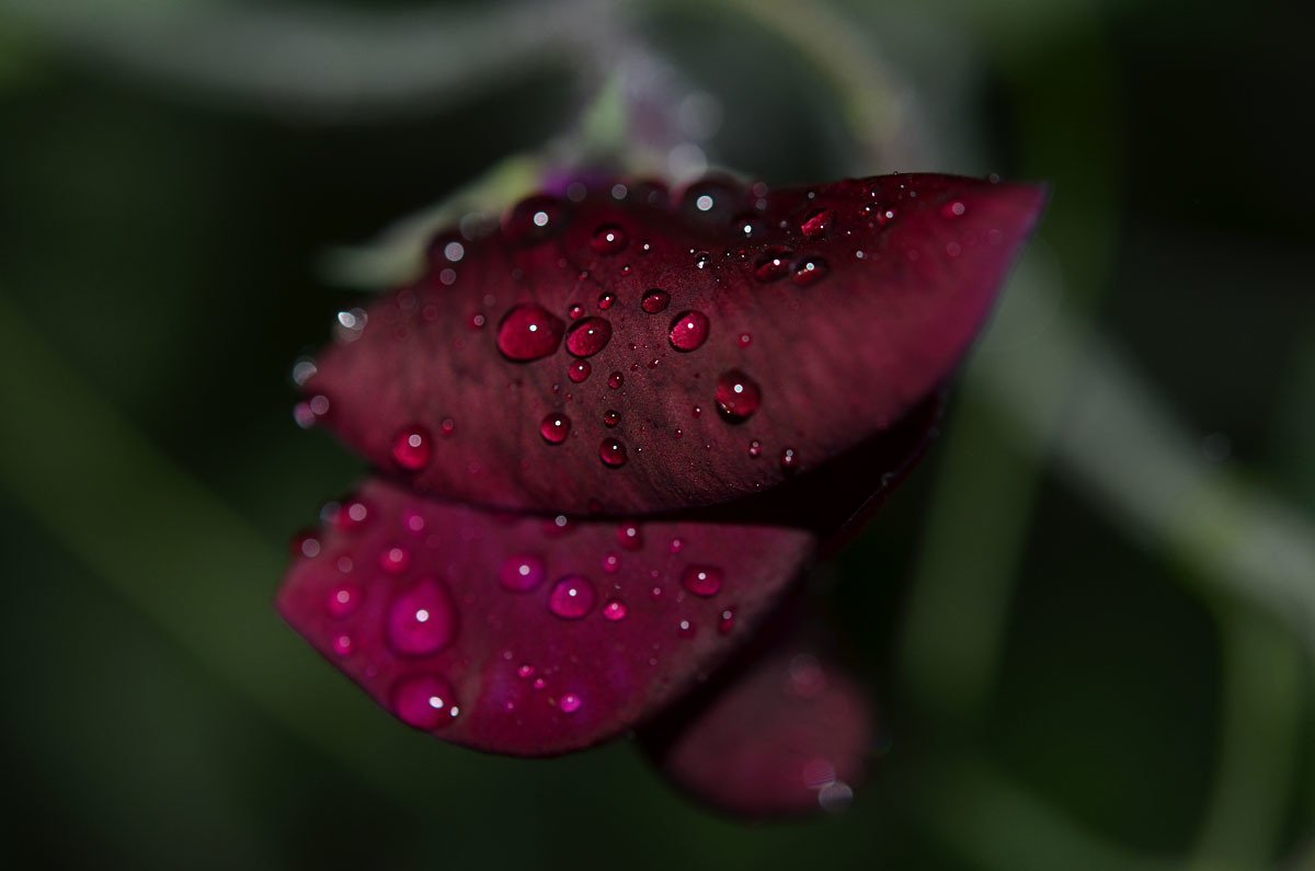 Beautiful pictures of flowers and insects 17