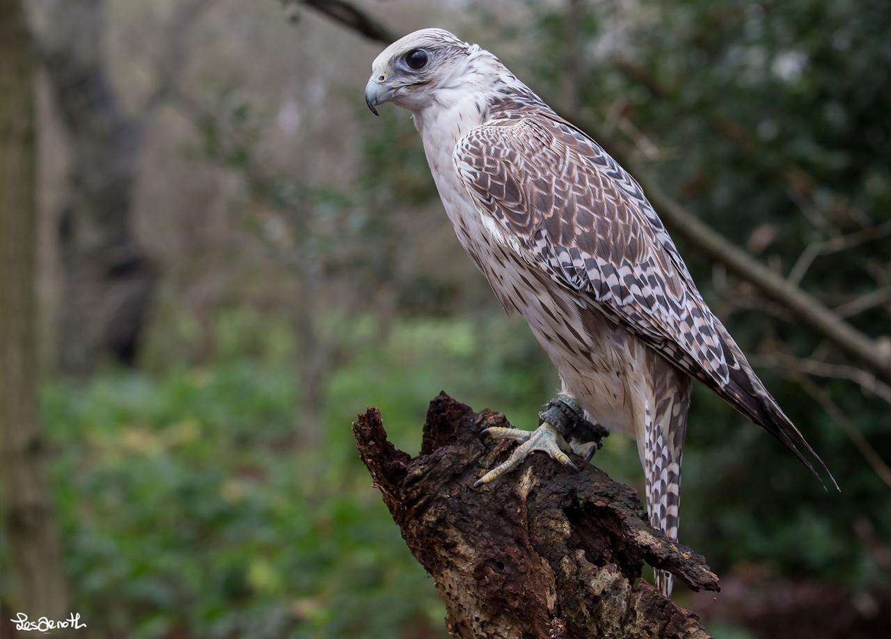 Birds centerfolds in the lens Forest Arnott 06