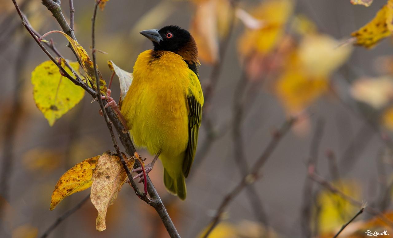 Birds centerfolds in the lens Forest Arnott 15