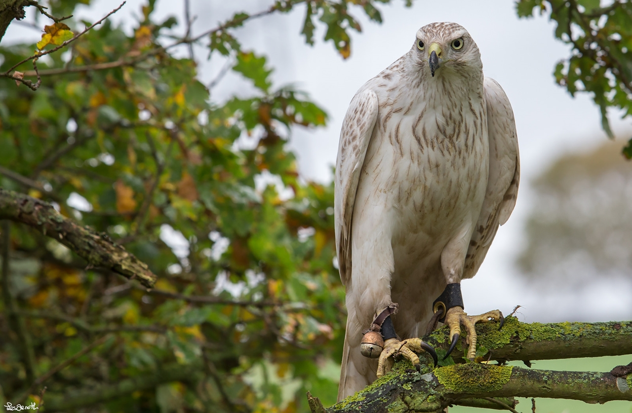 Birds centerfolds in the lens Forest Arnott 24