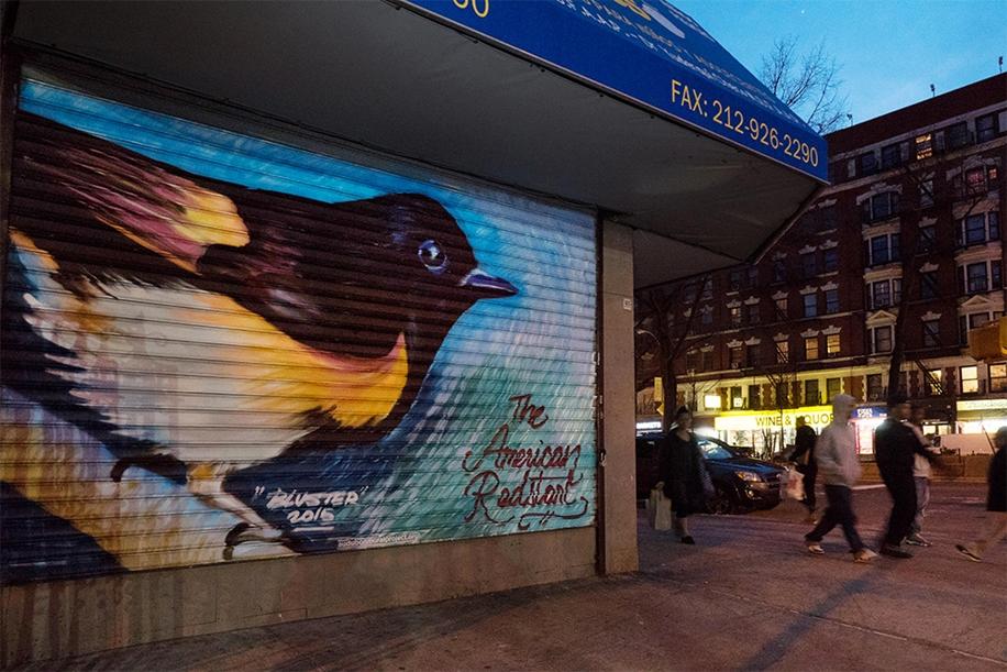 Endangered Birds to the Facades of Manhattan 06