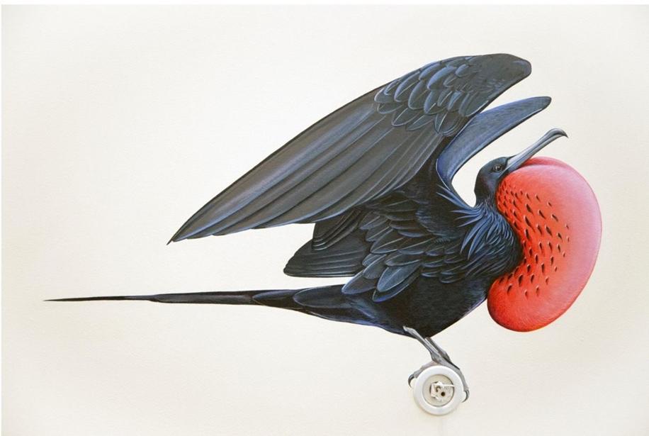 Endangered Birds to the Facades of Manhattan 11