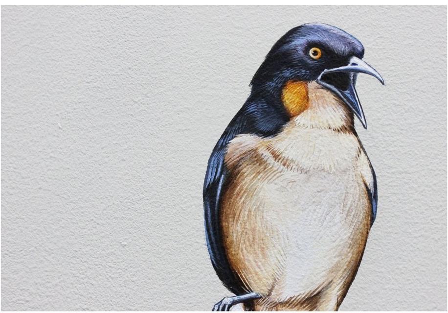Endangered Birds to the Facades of Manhattan 13