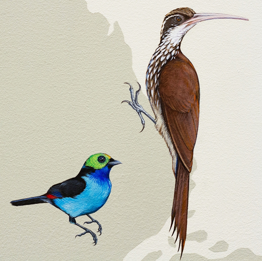 Endangered Birds to the Facades of Manhattan 15