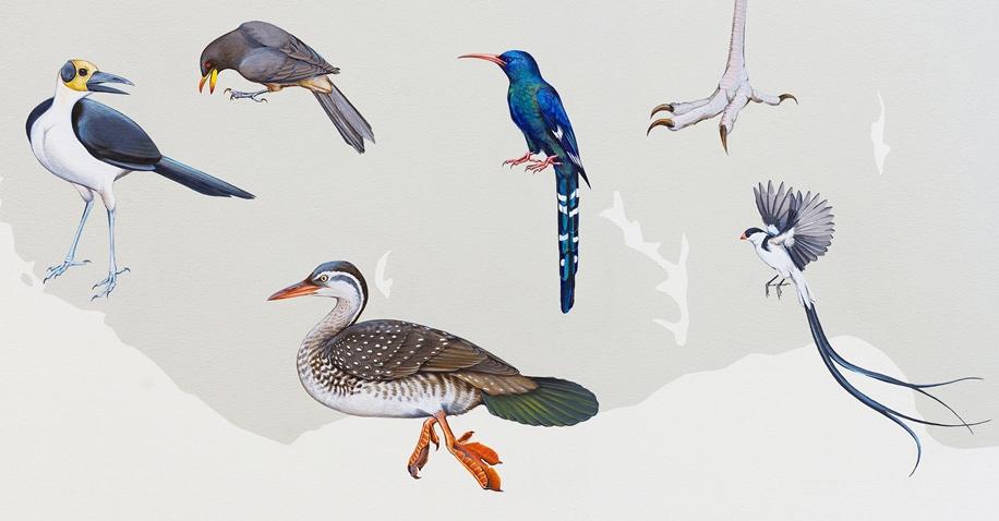 Endangered Birds to the Facades of Manhattan 16