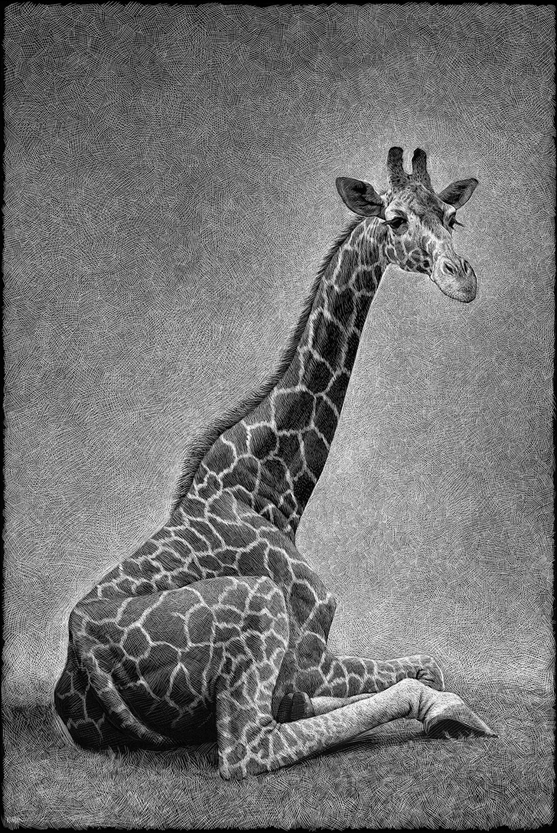 Excellent drawings of animals from Ricardo Martinez Ortega 03