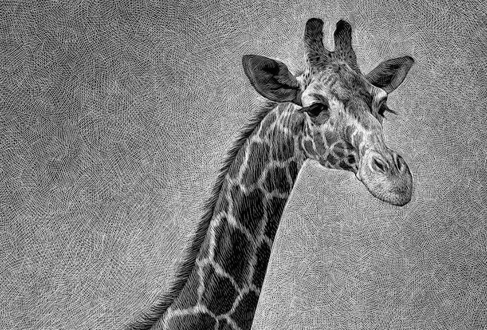 Excellent drawings of animals from Ricardo Martinez Ortega 04