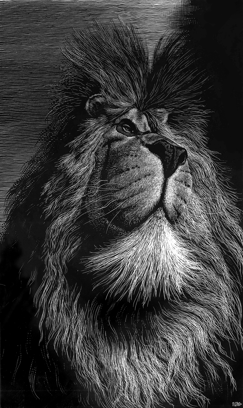Excellent drawings of animals from Ricardo Martinez Ortega 13