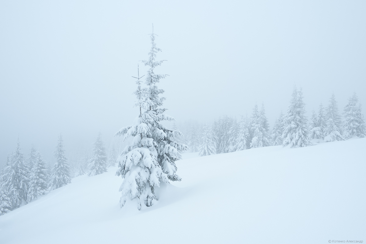 Fabulous winter 02