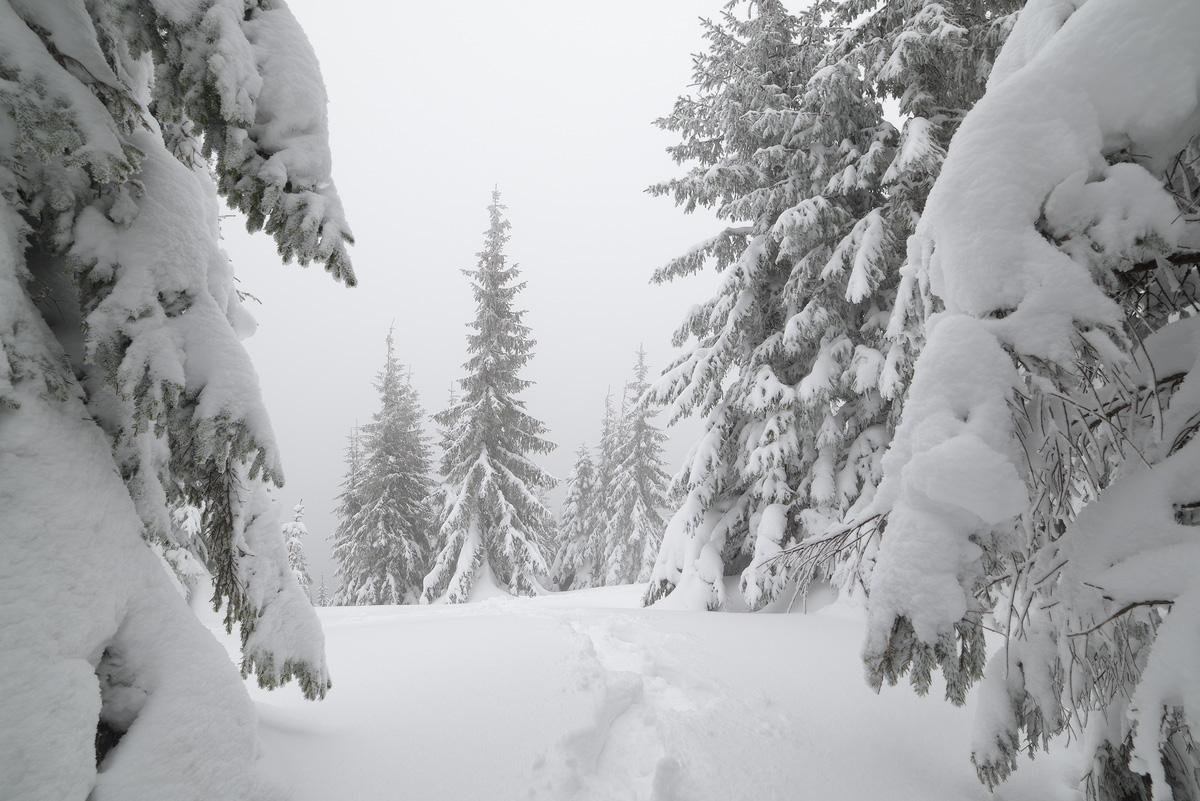 Fabulous winter 18