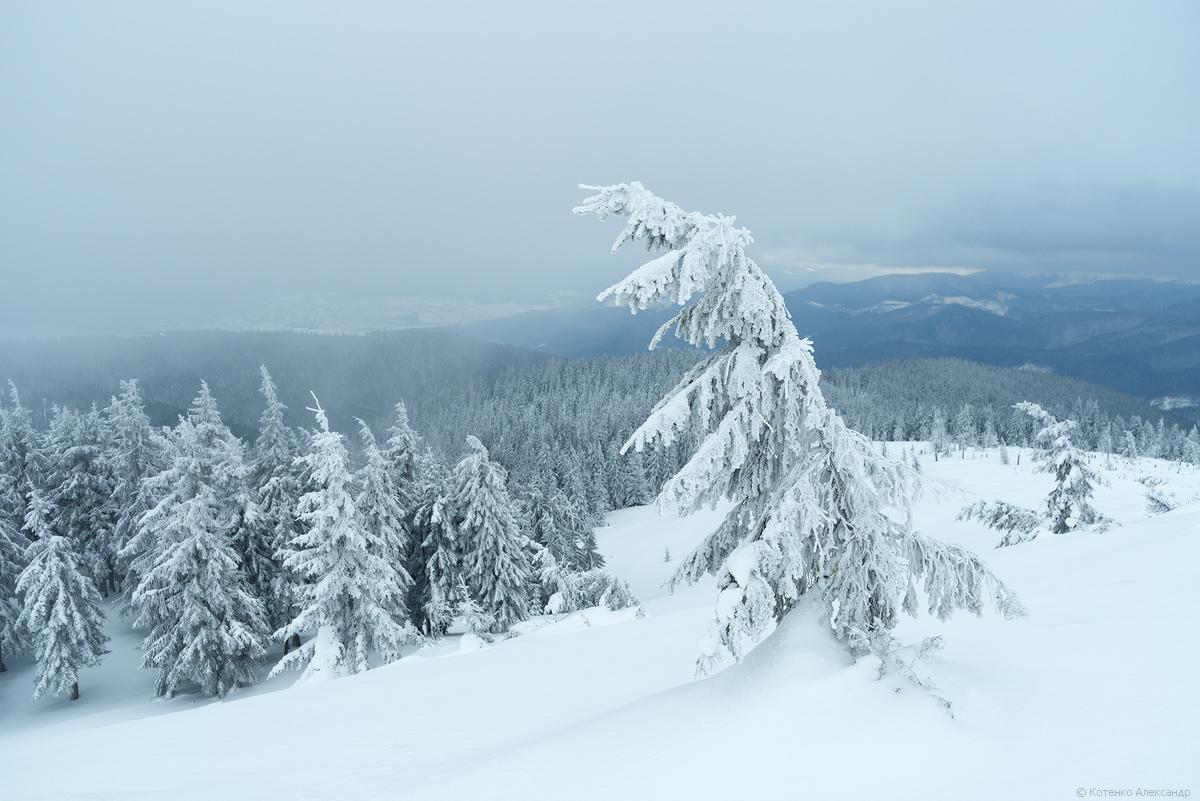 Fabulous winter 23