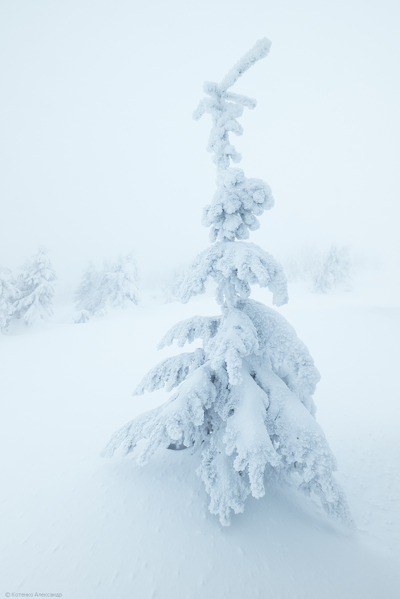 Fabulous winter 24