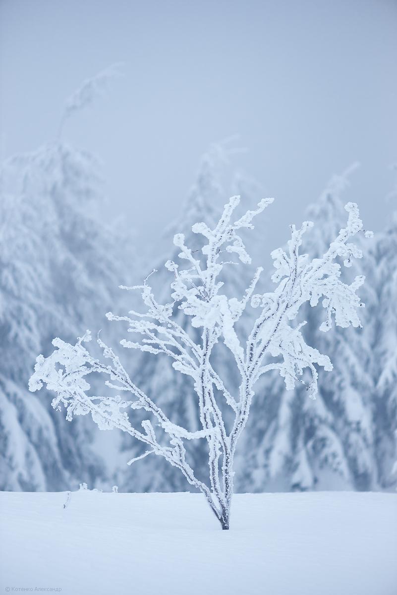 Fabulous winter 27