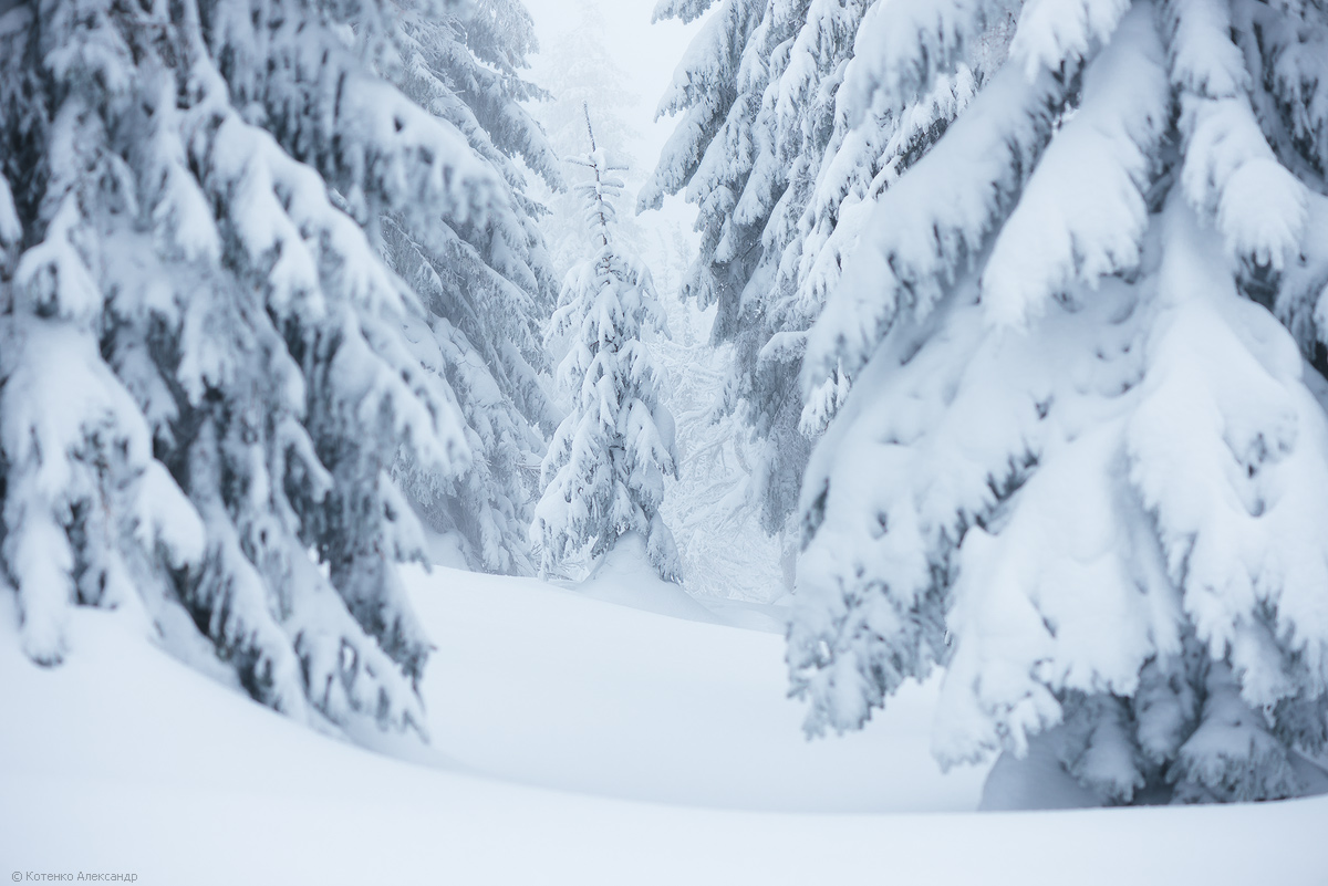 Fabulous winter 28