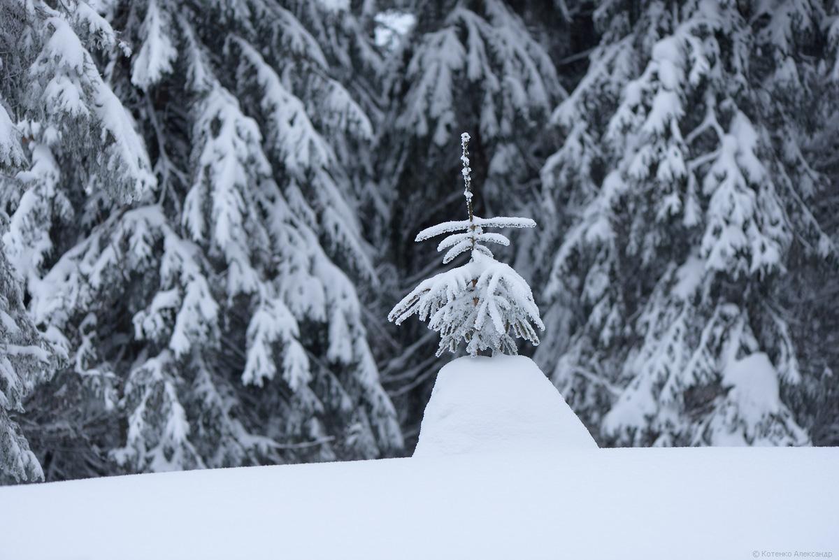 Fabulous winter 29