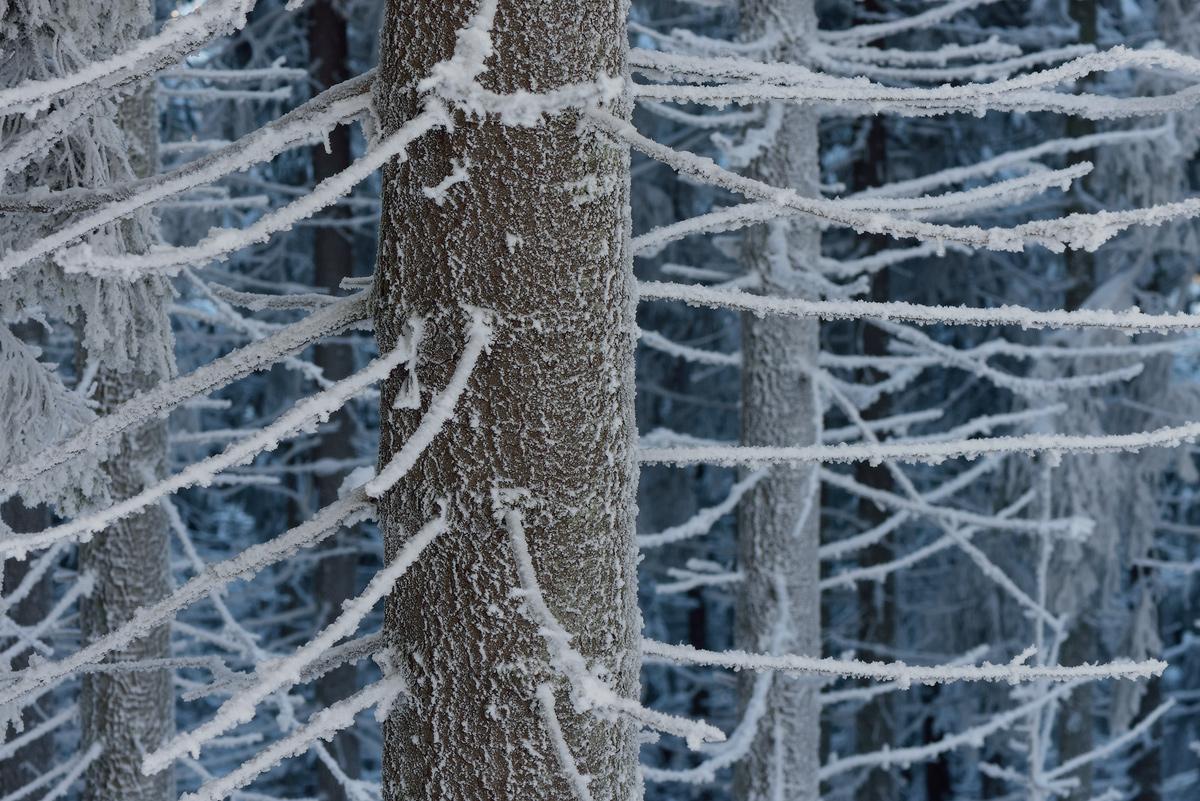 Fabulous winter 37