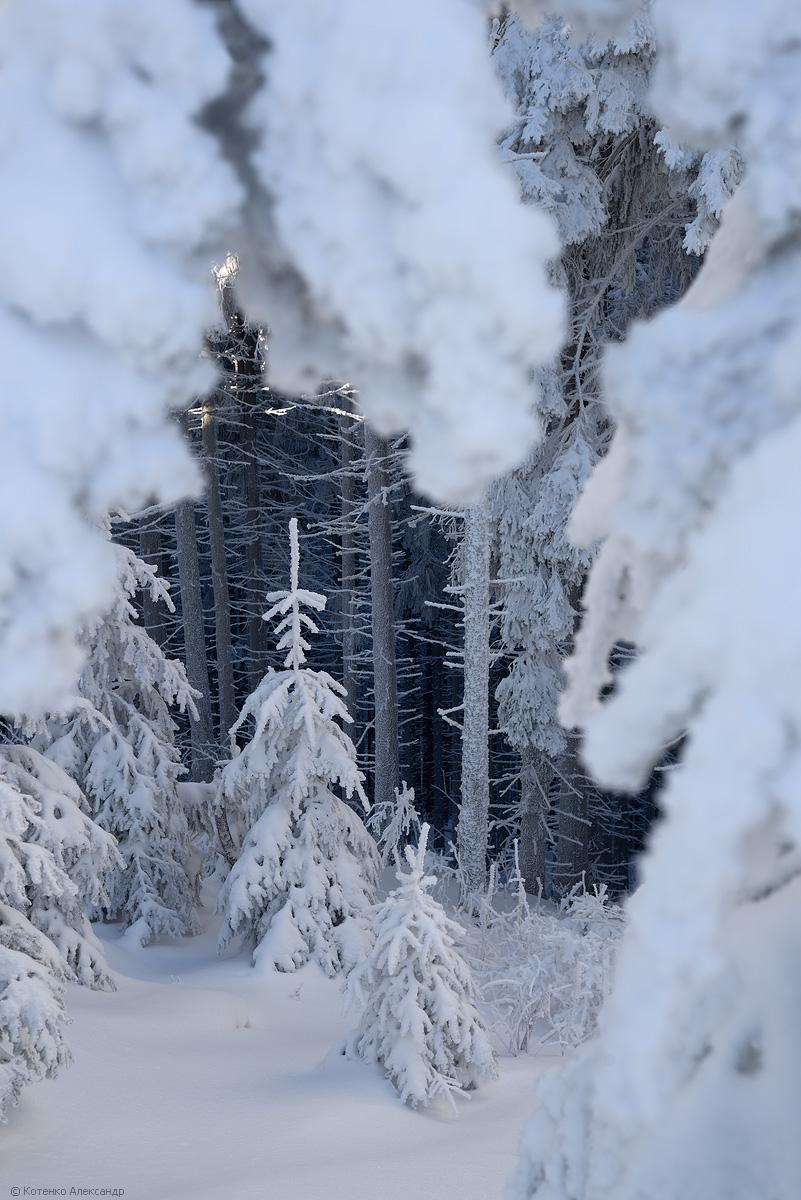 Fabulous winter 38