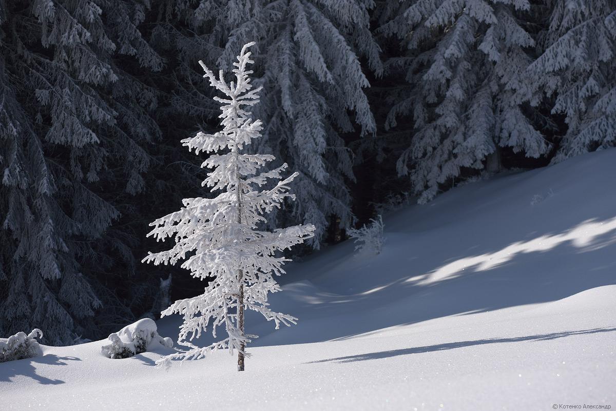 Fabulous winter 40