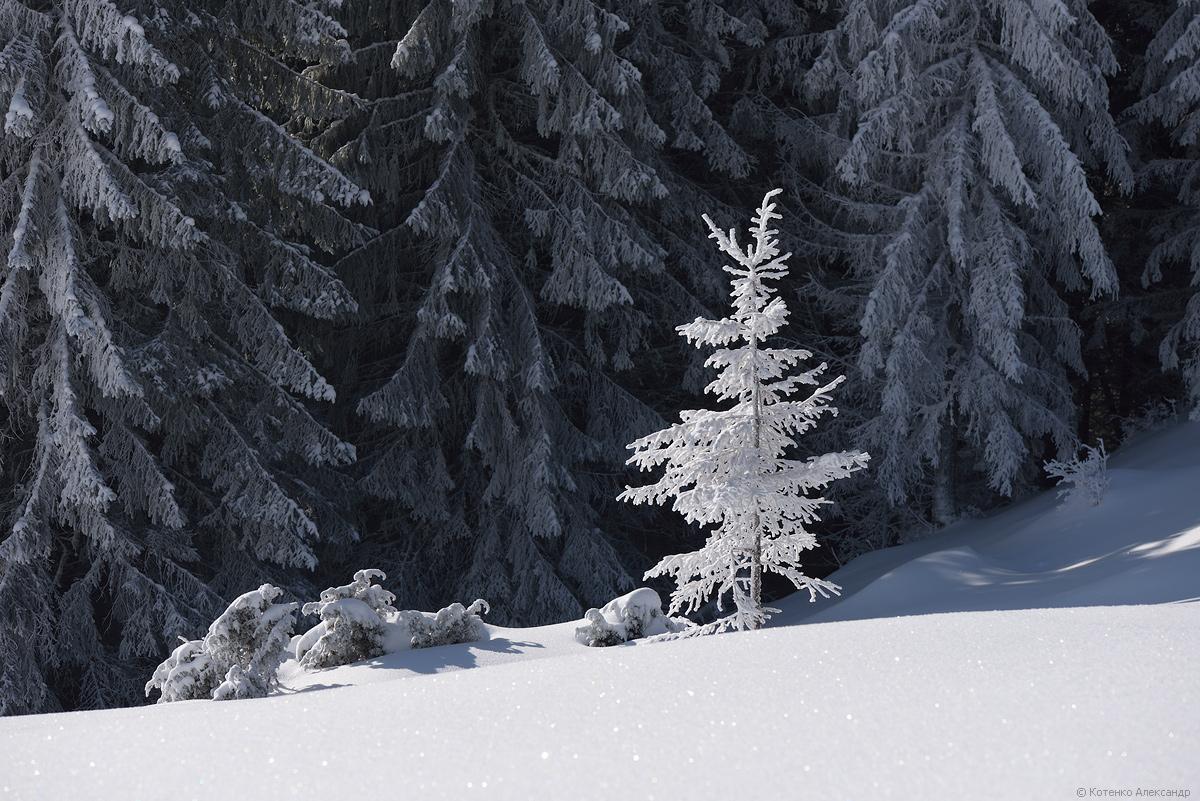 Fabulous winter 41