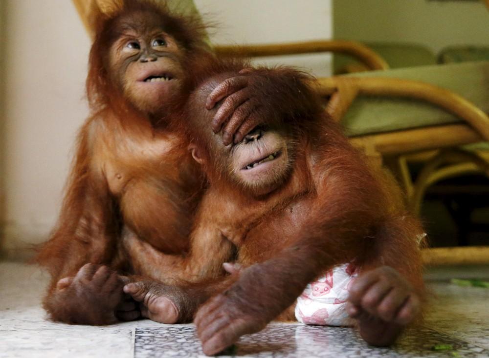 Интересные фотографии с животными, сделанные в 2015 году