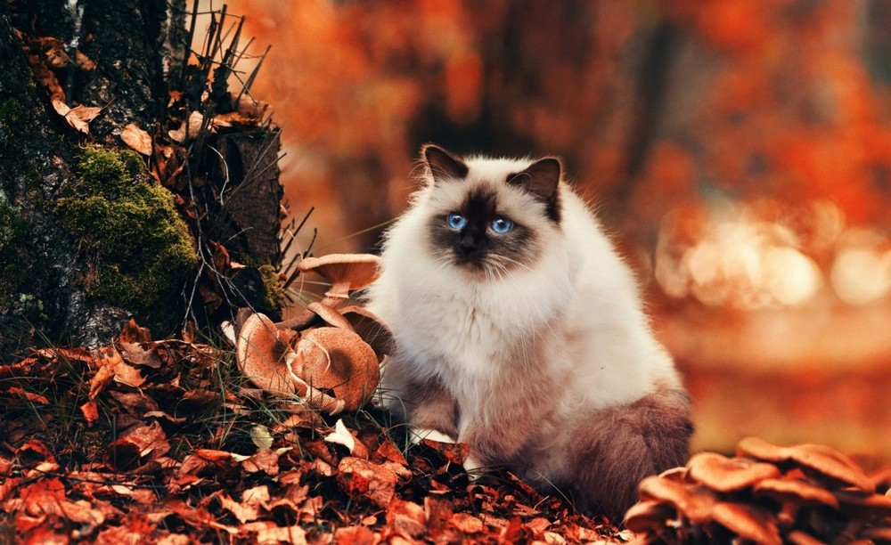 Funny and cute animals 11