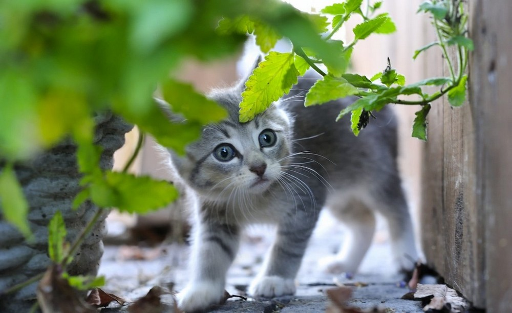 Funny and cute animals 22