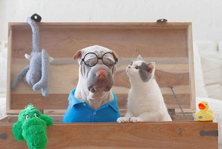 Photogenic Shar Pei and Cat are the Cutest of Best Friends 01