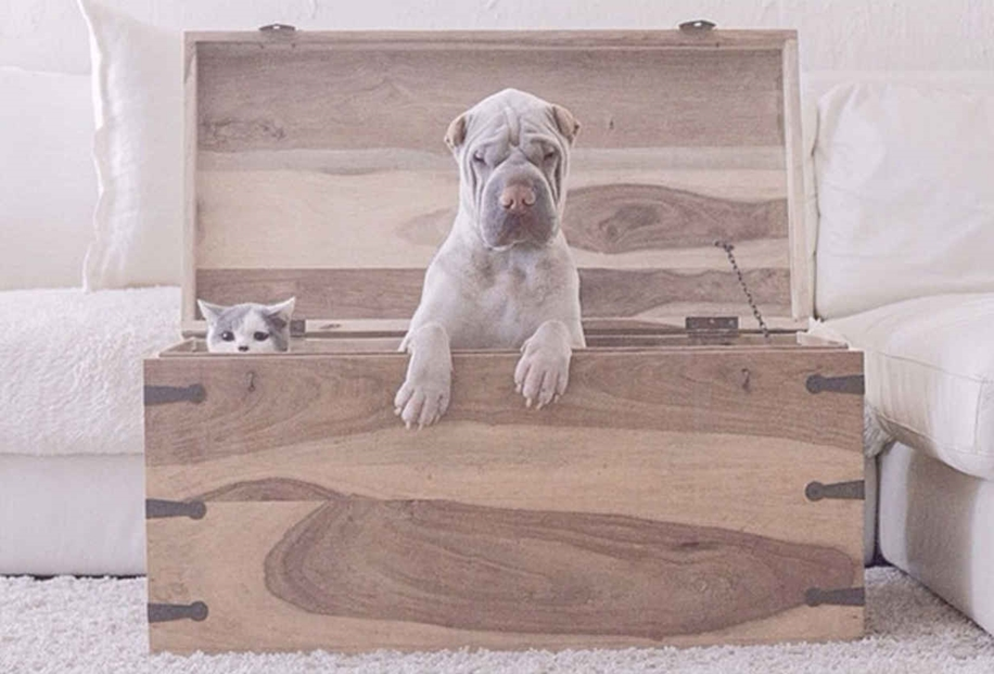 Photogenic Shar Pei and Cat are the Cutest of Best Friends 06
