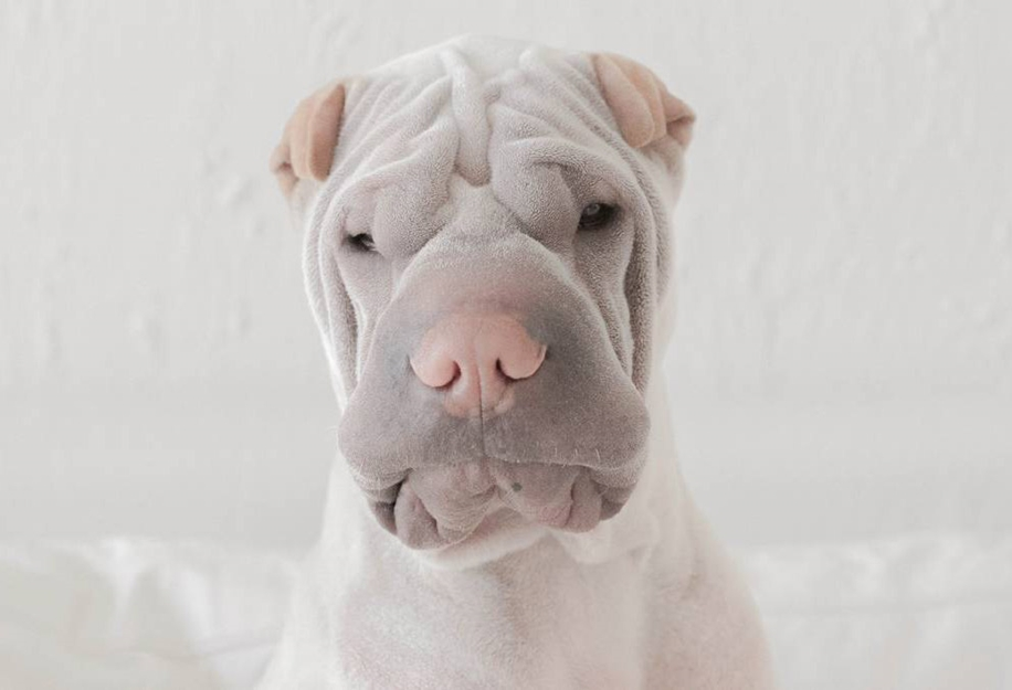 Photogenic Shar Pei and Cat are the Cutest of Best Friends 13