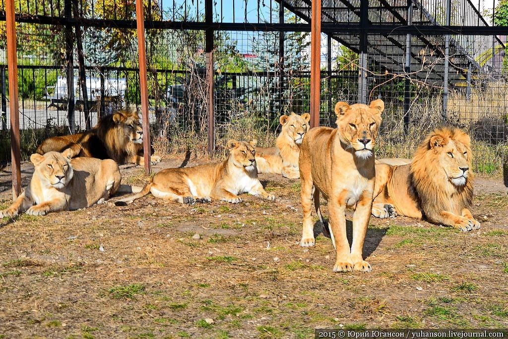 Safari Park Taigan in Crimea 09