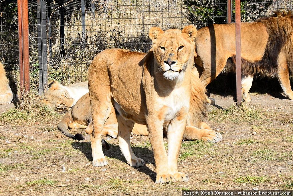 Safari Park Taigan in Crimea 10