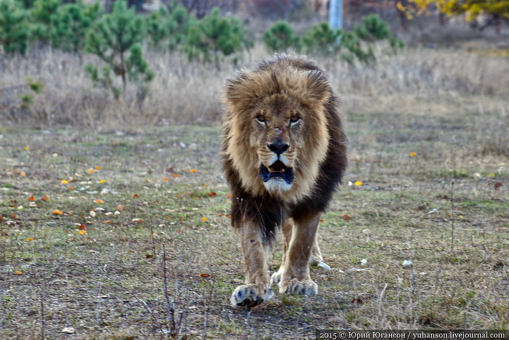 Safari Park Taigan in Crimea 11