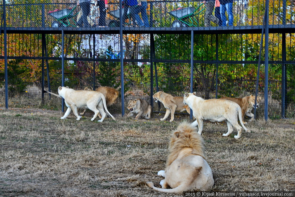 Safari Park Taigan in Crimea 12