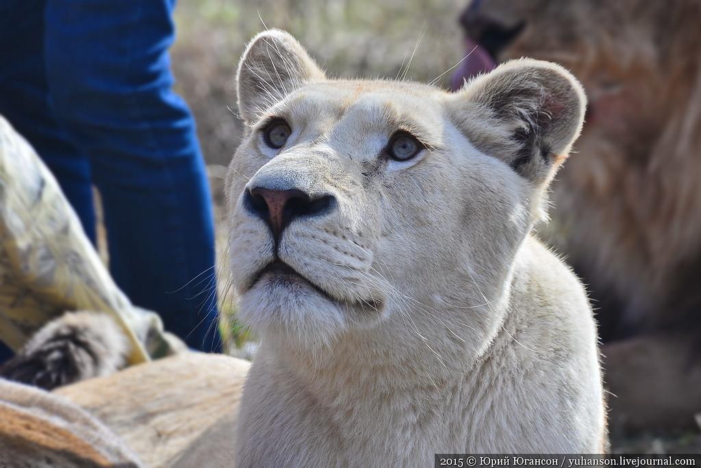 Safari Park Taigan in Crimea 16