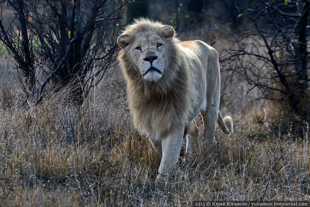 Safari Park Taigan in Crimea 17