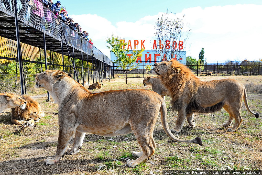 Safari Park Taigan in Crimea 18