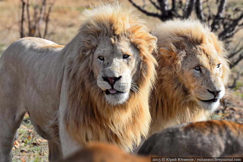 Safari Park Taigan in Crimea 22