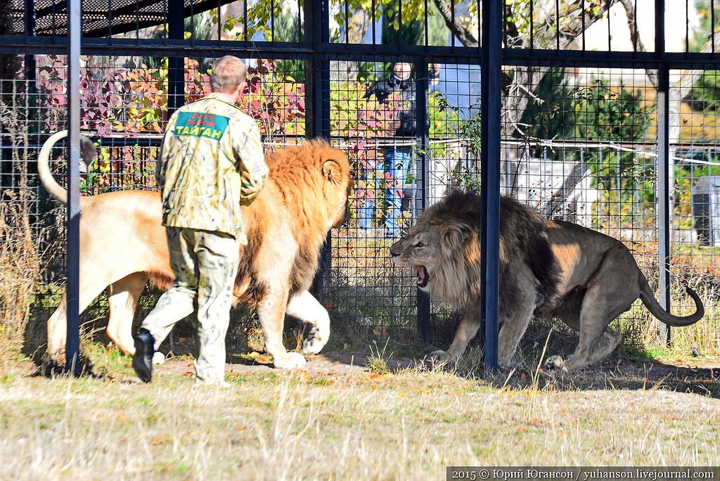 Safari Park Taigan in Crimea 23