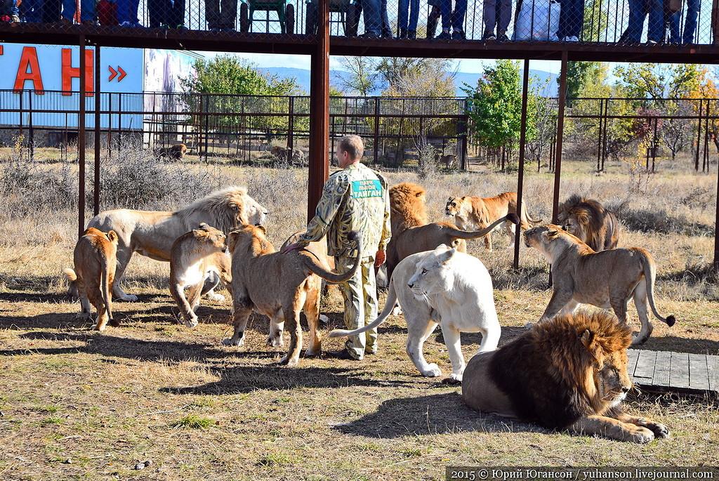 Safari Park Taigan in Crimea 24