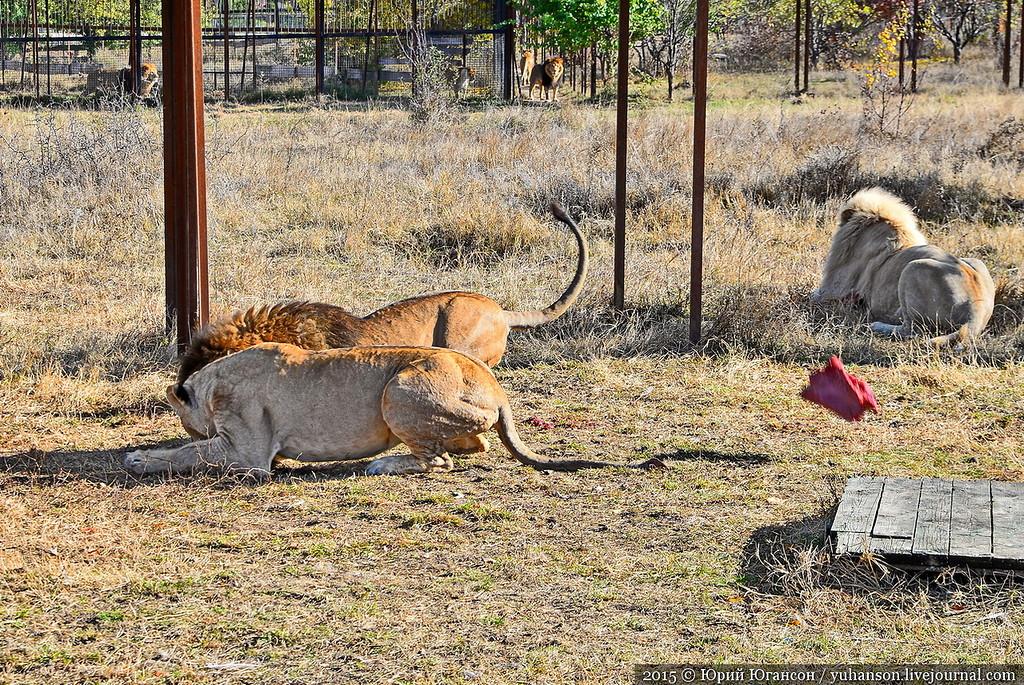Safari Park Taigan in Crimea 25