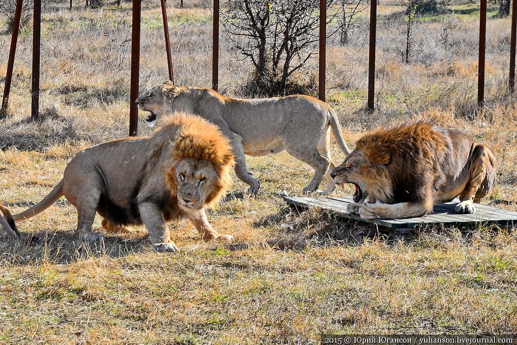 Safari Park Taigan in Crimea 26