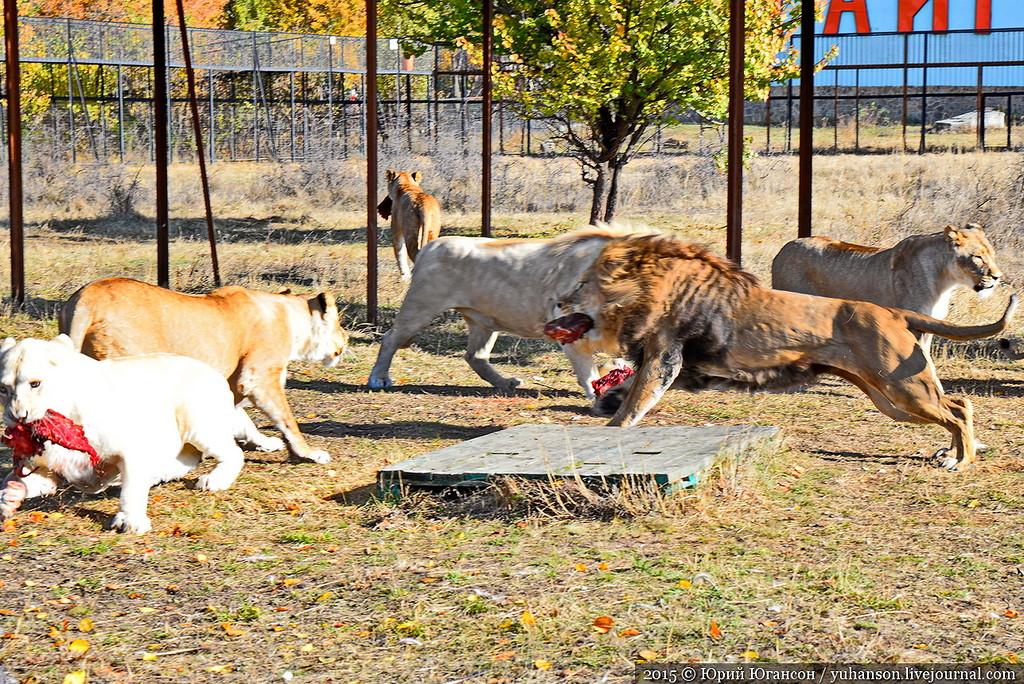 Safari Park Taigan in Crimea 27