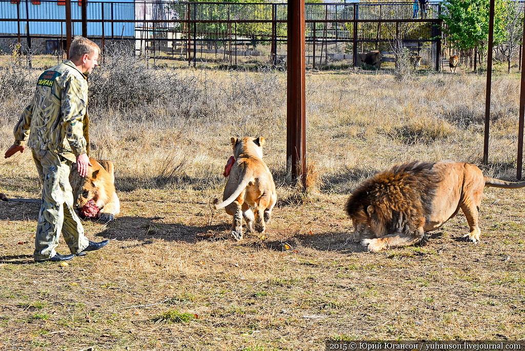 Safari Park Taigan in Crimea 28