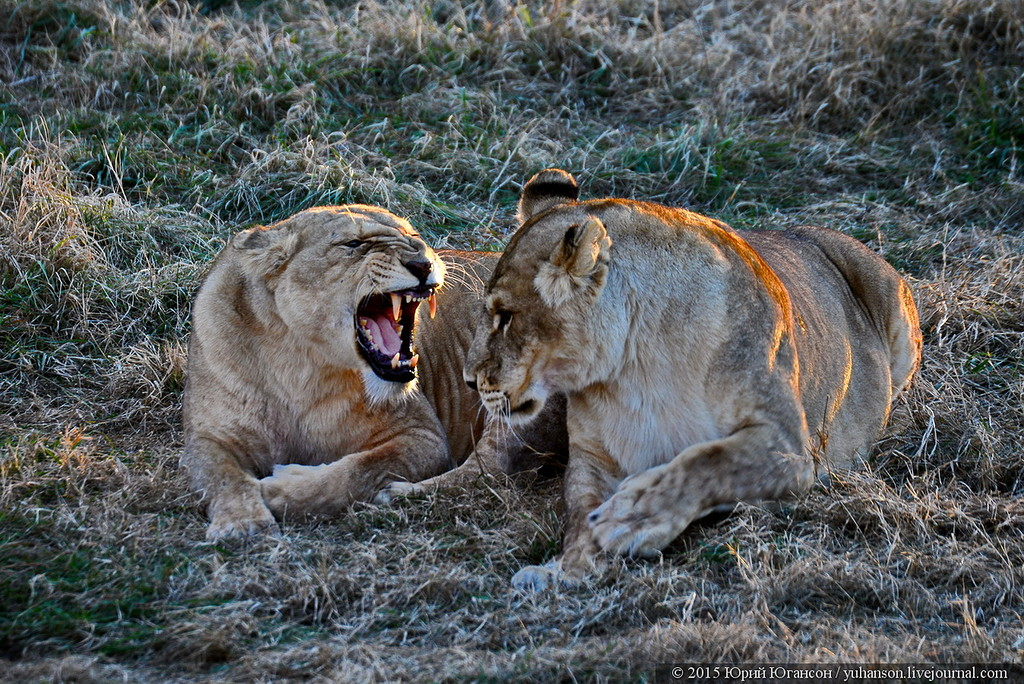 Safari Park Taigan in Crimea 32