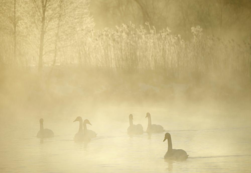 Swan Lake 09